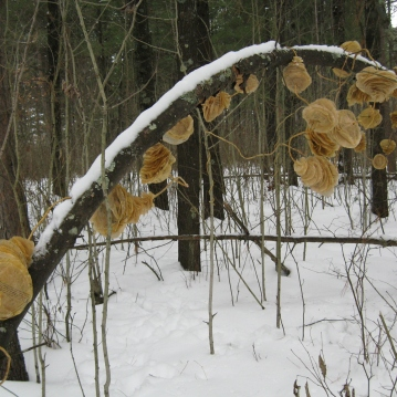 Installation in the woods, 2008.